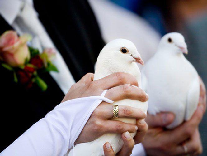 Голуби на весіллі: зворушлива фотосесія