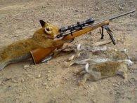 Полюємо на лисицю