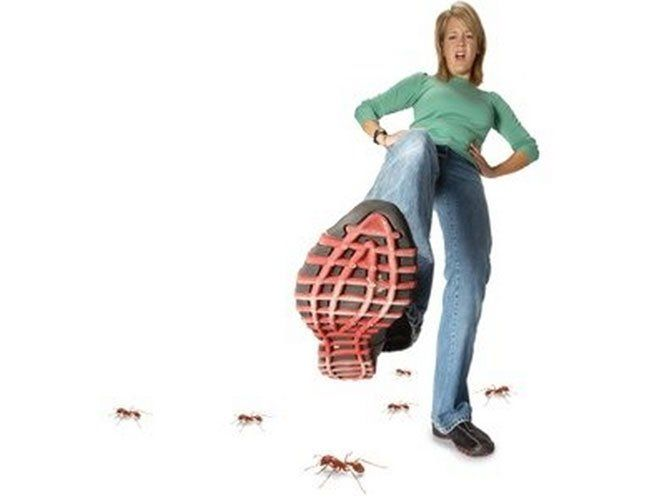 Як позбутися хатніх мурах