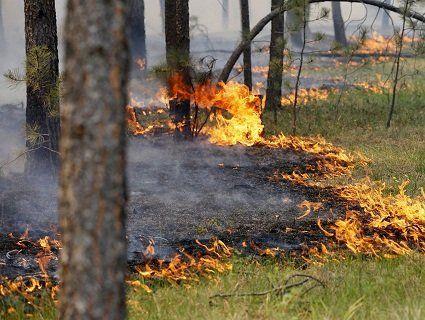 Через пожежі на Волині згоріли 70 гектарів лісу