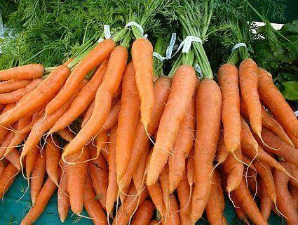 Яку моркву сіяти?
