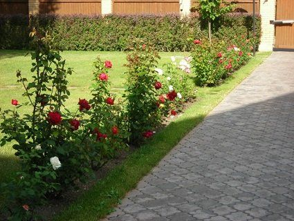 У Луцькому районі жінка вкрала з дачі 50 кущів квітів