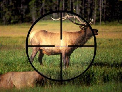 Розміри штрафів за браконьєрство