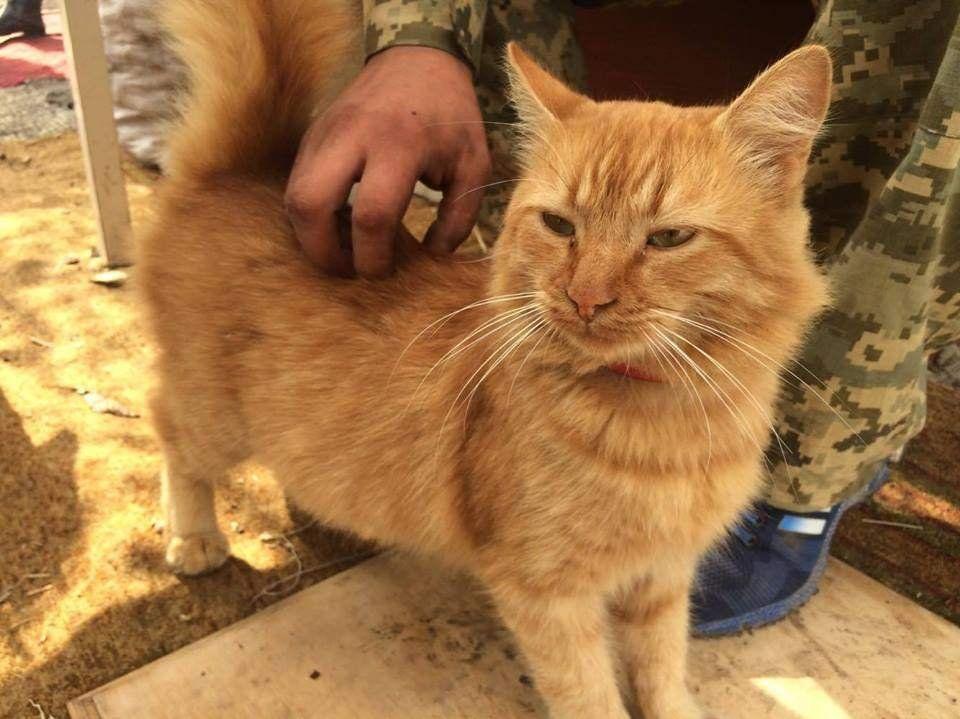У АТО кіт-розвідник дратує бойовиків