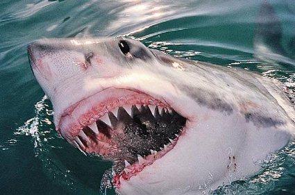 Рятуючись від акули, чоловік проплив сім кілометрів