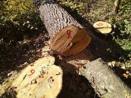 «Чорні» лісоруби обстріляли і взяли у заручники лісову охорону