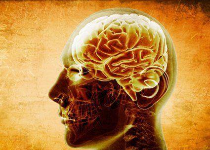 Дружба впливає на старіння мозку?