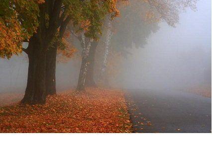 7 листопада погода - обережно, тумани