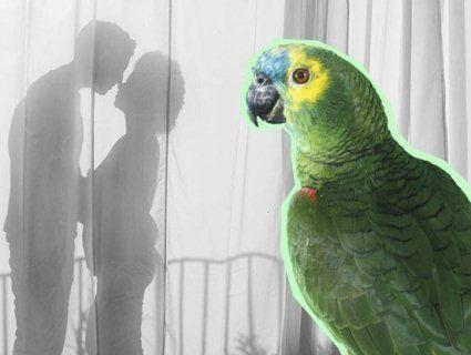 Курйоз: папуга викрив зраду свого господаря