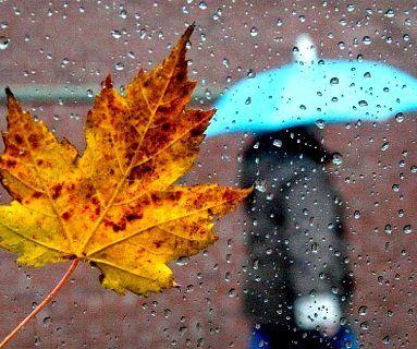 12 листопада: дощі майже у всіх регіонах