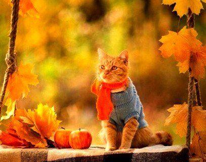 Погода на 13 листопада: у більшості областей – сухо, ввечері – похолодання
