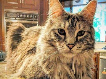 За зниклих котів-рекордсменів дають $100 тисяч у біткоїнах