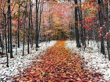 20  листопада погода – мокрий сніг та дощі