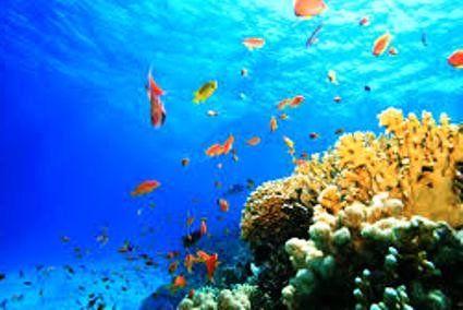 Антибіотики видобуватимуть з дна океану