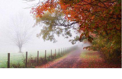 Прогноз погоди на середу, 23 листопада -поменшає опадів і потеплішає.