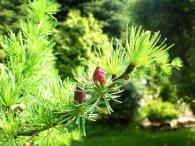Екологи розповіли, як відновлюватимуть карпатські ліси