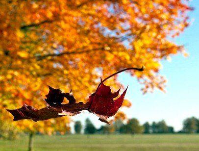 25 листопада: якою буде погода та народні прикмети