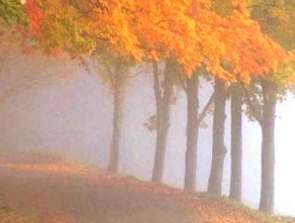 26 листопада: очікується прохолодна погода з туманами
