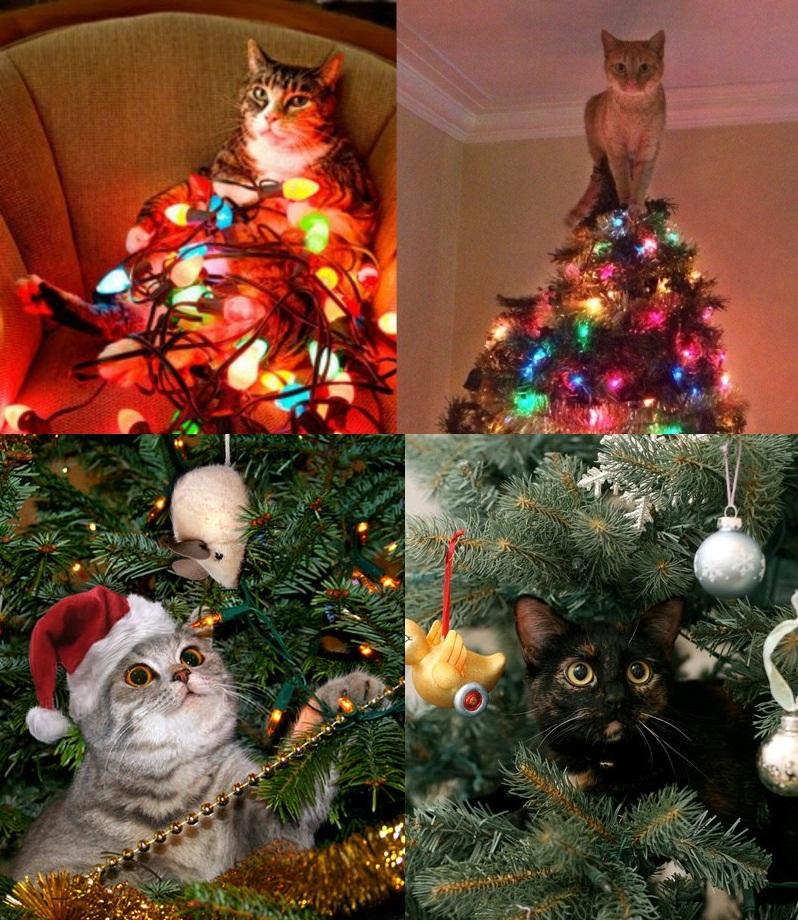 Непрості стосунки котів і новорічної ялинки (фото)