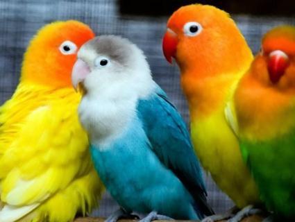 Як доглядати за папугою