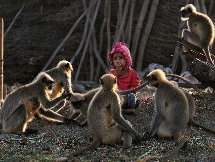Дворічний малюк заприятелював зі зграєю диких мавп