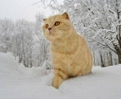 В Україну йдуть морози та снігопади