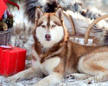 Рік Собаки буде набагато сприятливішим і плідним, ніж попередній (східний гороскоп)