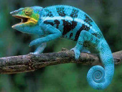 Що потрібно знати про екзотичних тварин?