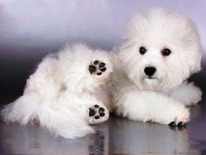 Китаянка «народила» щеня просто в аеропорту