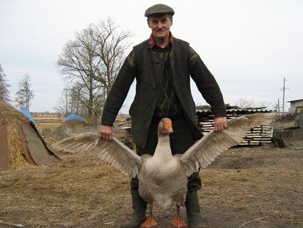 Колишній зоотехнік продає олігархам гігантських гусей і королівських павичів