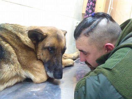 Собаку, з якою пройшов АТО, тепер рятує після аварії через петарди