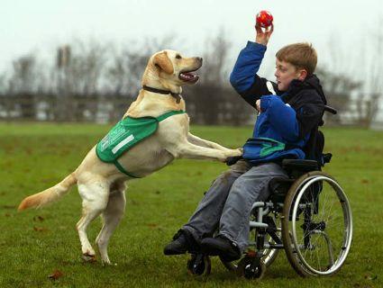 На метод лікування собаками в Луцьку Євросоюз виділив більш як 100 тисяч євро