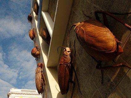 Викрадачам 500 живих тарганів пригрозили в'язницею