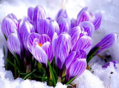 8 Березня – свято євреїв, повій чи весни та краси?