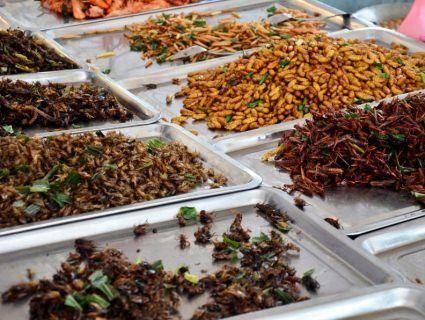 Найдивніші страви світу: жуки, хробаки, тухлі тюлені