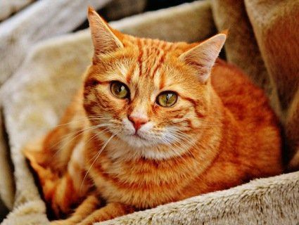 Щаслива історія: кіт через 14 років знайшов свого першого господаря