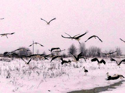 Птахів рятують з крижаної пастки