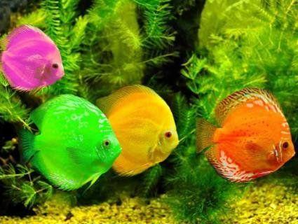 А ваші рибки страждають від стресу?