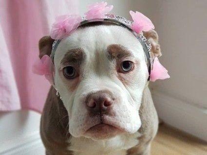 Найсумніша собака стала трендом Інтернету (фото)