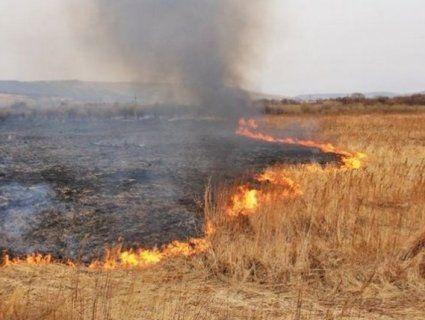 До 20 тисяч штрафу за спалювання трави