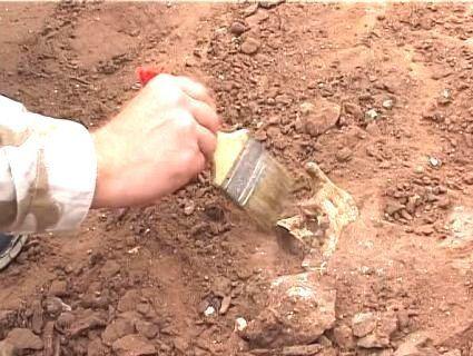 Знайшли середньовічний скелет із ножем замість руки