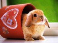Чим не можна годувати кролика?