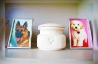Бобік прощай: у Луцьку майже пів мільйона дають на собачий крематорій