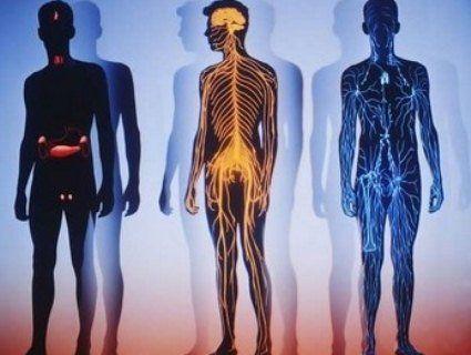 Експерти порахували, скільки коштує людське тіло