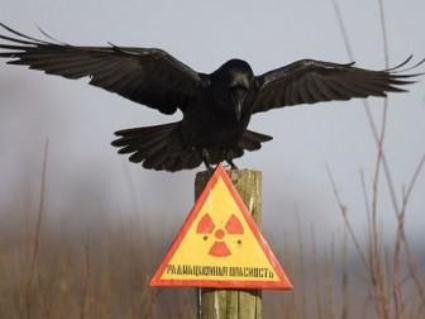 Чи є в Чорнобилі зараз тварини-мутанти та як живуть люди, які повернулися в зону