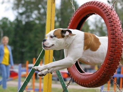 Лучани хочуть зробити собак спортивними