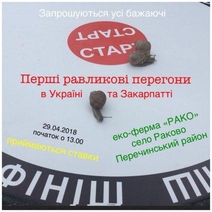 Равликові перегони тепер і в Україні