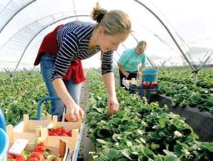 Два мільйони українських заробітчан працює зараз у Польщі