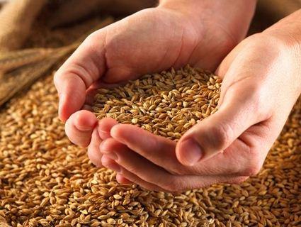 Туреччина зацікавилася українською сільгосппродукцією