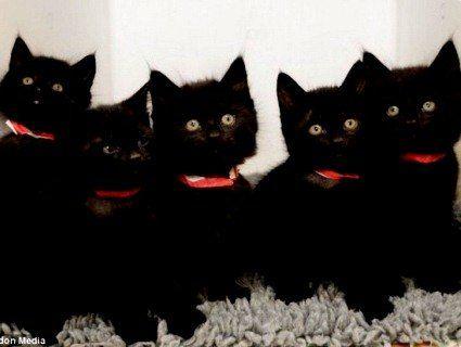 У Луцьку фестивалитимуть чорні коти